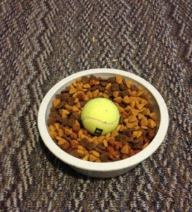 Pet hack dog food innovation researchPet hack dog food innovation research